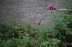 jardin-1-4