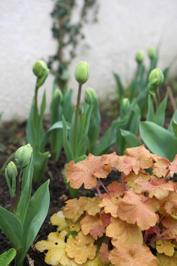jardin au printemps-1