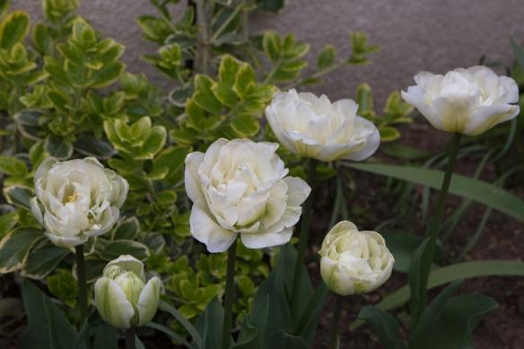 jardin au printemps -1