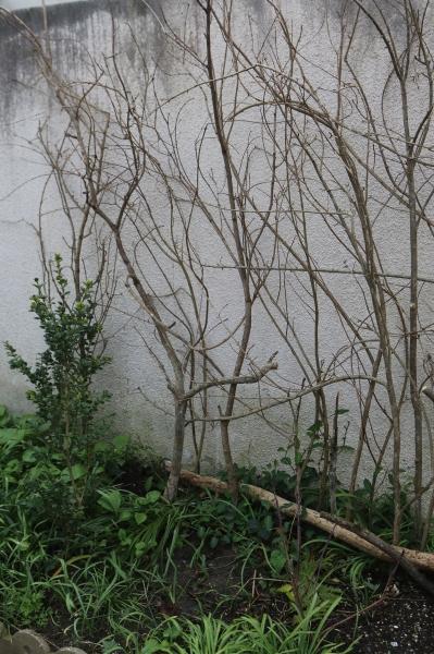 jardin au printemps-4